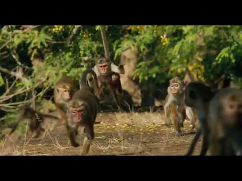Wild animal - Monkey video