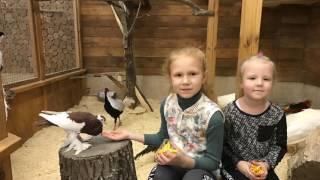 Макки-Пакки Контактный Зоопарк(В этом видео мы идём в контактный зоопарк в Одессе,там мы будем смотреть, кормить и гладить всяких зверюшек..., 2016-12-05T08:06:11.000Z)