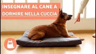 Come insegnare al cane a dormire nella cuccia – TUTORIAL passo per passo