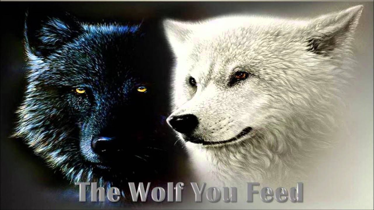 The wolf you feed youtube the wolf you feed biocorpaavc Gallery