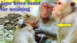 Emotional Crying! Jane biites and drags Janet for weaning, Janet cries deeply scared mom