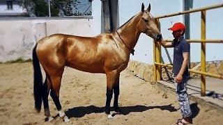 Самые экзотические и красивые породы лошадей в мире!
