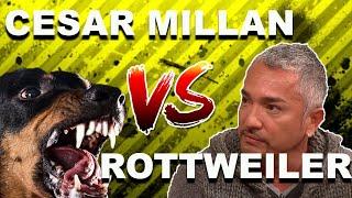 Download Cesar Millan vs. OVERPROTECTIVE Rottweiler Mp3 and Videos