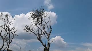 Tiupan Angin Tiada Henti / Setelah Peluang Hujan Diberhentikan - Springfield 22 April 2019