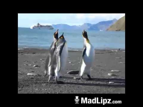 Pinguine beim Kampf