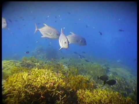 Reefs of Malaysia - Marine Heritage