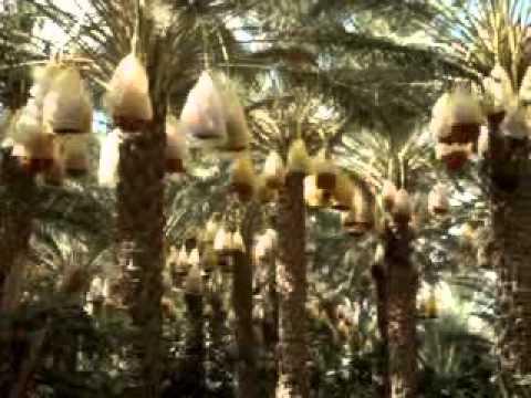Kebili. Túnez