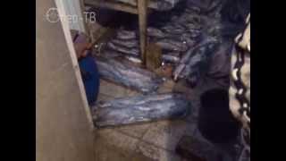 Обнаружен подпольный цех копчения рыбы