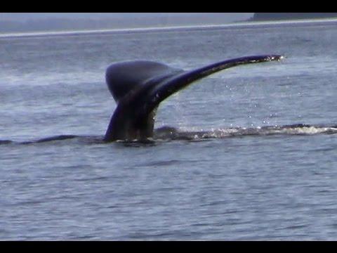 Whale Watching Juneau Alaska June 2016