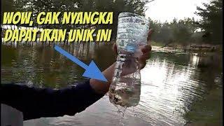 Download Video Lihat hasilnya bos ! Seperti inilah cara membuat perangkap ikan dari botol bekas MP3 3GP MP4