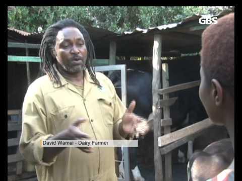 GBS KENYA NEWS 0301 DAIRY FARMING