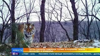"""Тигры сделали семейное селфи в парке """"Земля леопарда"""""""