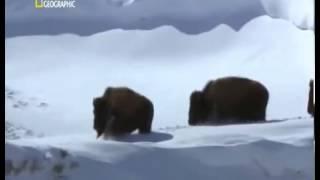 Documental El valle de los lobos