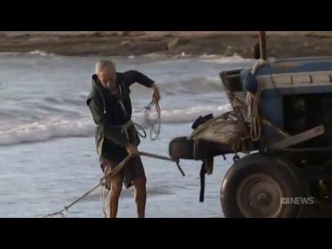 Australia's wild salmon sold for bait, not for food