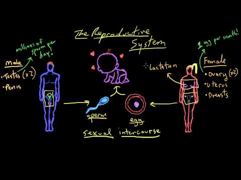 Khan Academy - Welcome to Reproductive System!