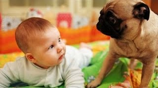 Dogs jealous of babies - Funny and cute compilation