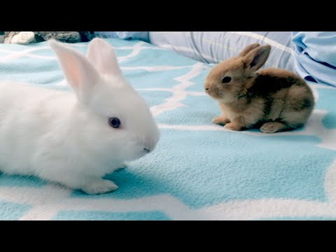 Baby Bunny Playdate: The Life and Death of Rabbits