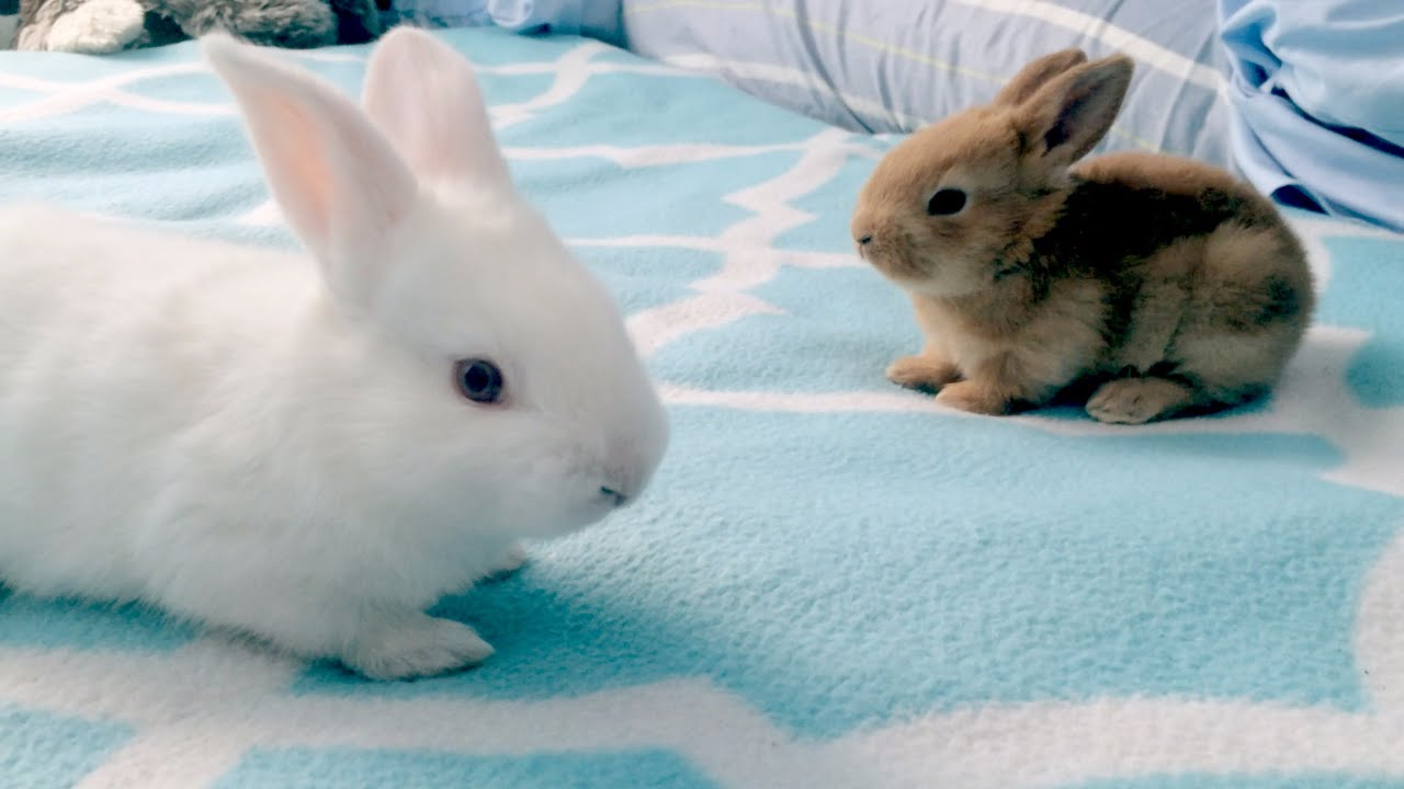 Baby Bunny Playdate: The Life and Death of Rabbits - YouTube