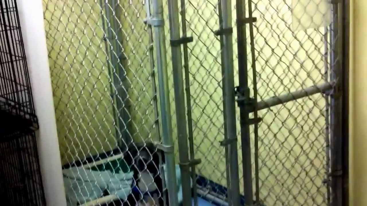 Columbus Pet Adoption