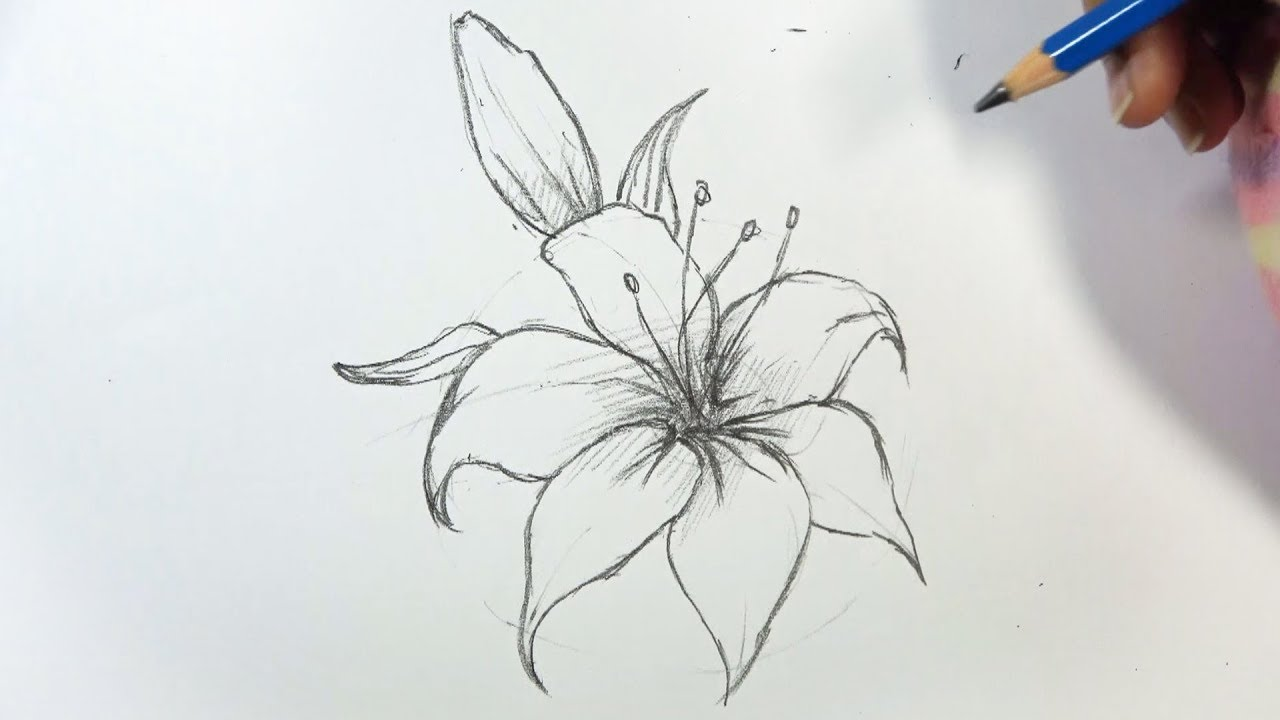 How To Draw A Lily Flower Step By Step Hihi Pencil Youtube