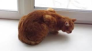 Тиреоидный кот. Фильм HD. Смотреть в хорошем качестве.