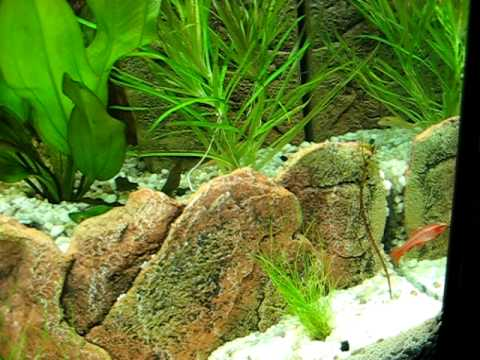 Aquarium Juwel Rio 180 Level 2 Youtube