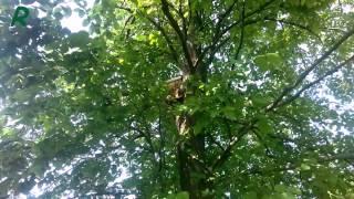 Установка ловушек, ловля блуждающих роев, пчела