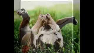 Фотографии животных)