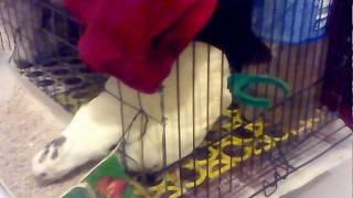 Клетка для перепелов из клетки для попугаев