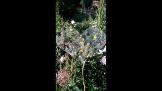 видео Парк «Буфф-сад»