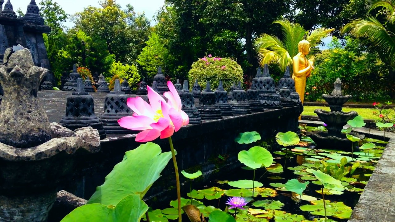 Lotus Flower Blown By The Wind In The Lotus Pond Monastery Youtube