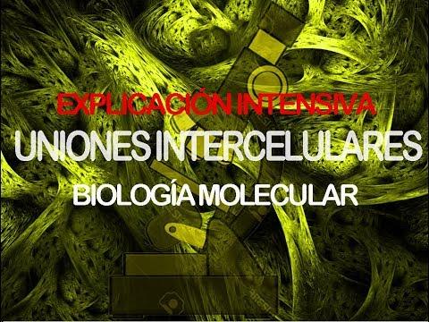 uniones intercelulares yahoo dating