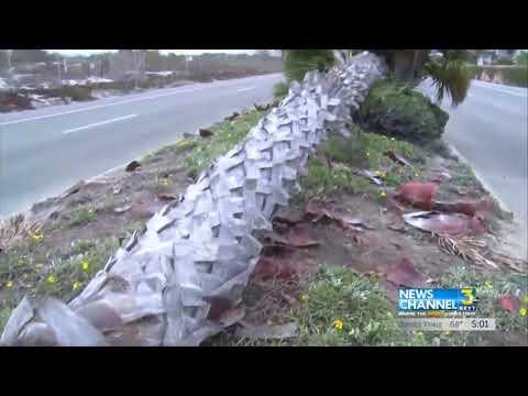 Mueren Tres Adolescentes en Accidente de Auto enOxnard