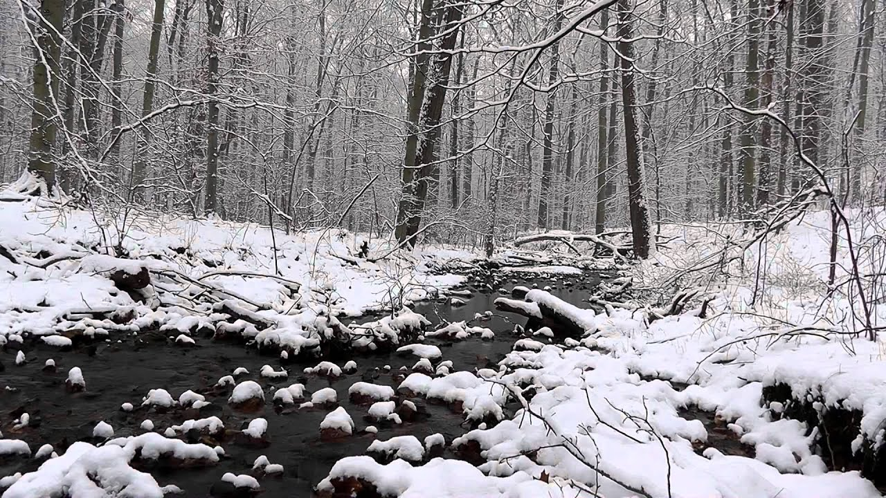 winter pennsylvania woods snow nature relaxing journey sounds