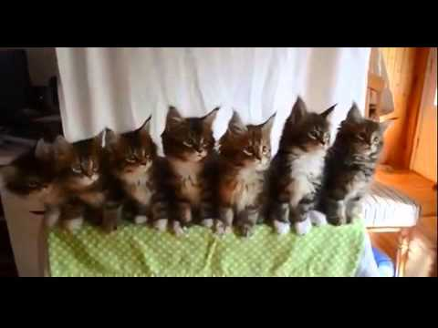 very funny cats dancing with music compilation