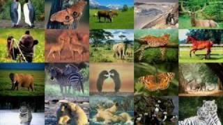 Man Gave Names To All The Animals. Jason Mraz-version