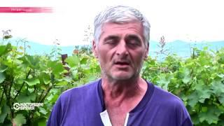 Вино высоких технологий: как грузинские виноделы используют достижения аграрной науки и техники