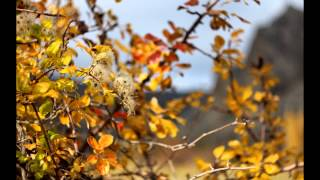 видео скачать картинки осень