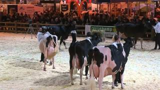 Concours race Prim'Holstein (5/6)