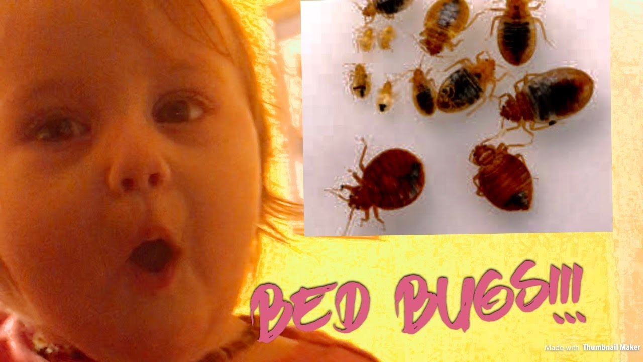 Bed Bug Spray Say Bye Bugs The Best Bed Bug Spray To Kill Bed Bugs