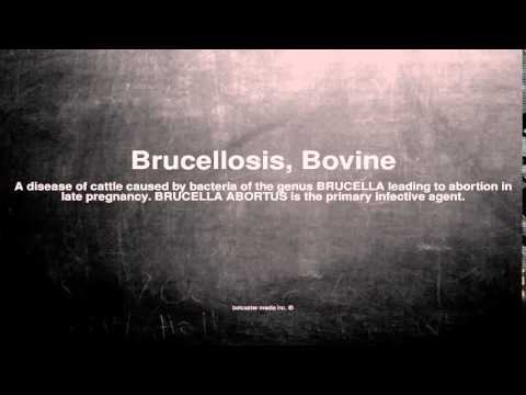 Medical vocabulary: What does Brucellosis, Bovine mean