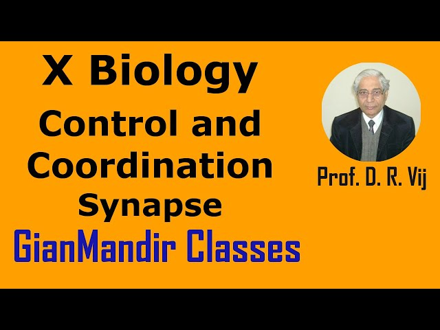 X Biology | Control and Coordination | Synapse by Manjit Ma'am