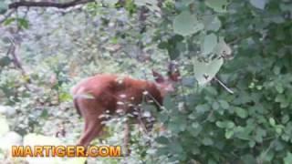 Dzikie zwierzeta River Grove Chicago wrzesien 2009 - Wild Animals