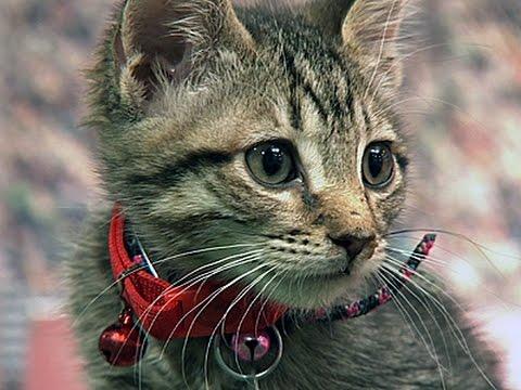 Kittens Go for Gold in Hallmark's Summer Games