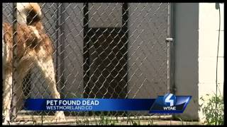 Family Says Dog Found Dead After Disappearing From Westmoreland County Boarding Kennel