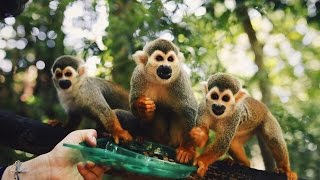 Monkey Jungle in the Dominican Republic