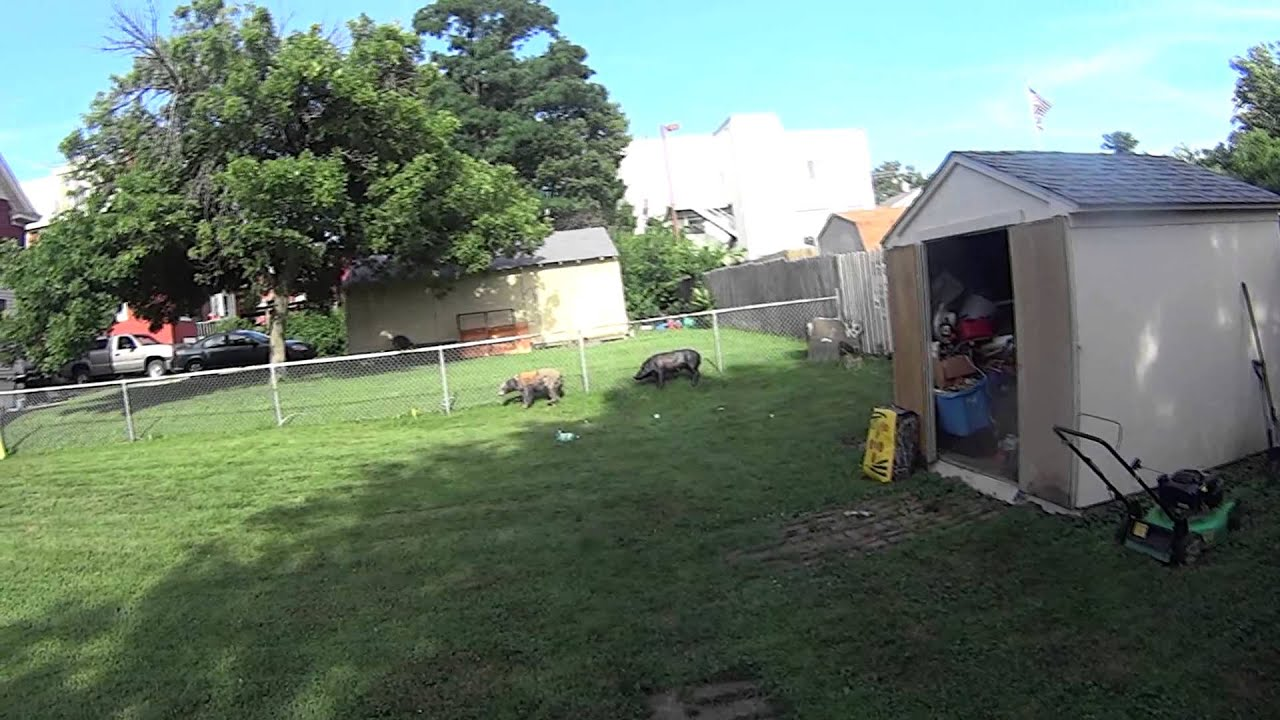fox archery bow rabbit hunting practice sony action cam youtube