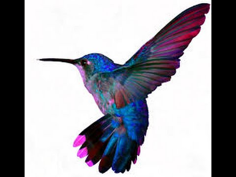 Hummingbird As A Spirit Guide What It Means When You Are Suddenly