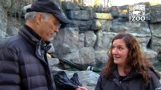 Polar Bear Anana Update - Cincinnati Zoo