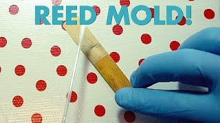 Reed Mold: It's real! It's disgusting! (It's curable!)
